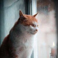 мой кот :: Хайруш Рахимов