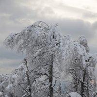 зима 5 :: Константин Трапезников