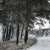 Немного воспоминаний о зиме :: Юрий Клишин