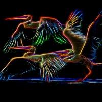 пеликаны :: Владимир Беляев ( GusLjar )