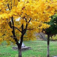Зеленый и желтый. :: Береславская Елена