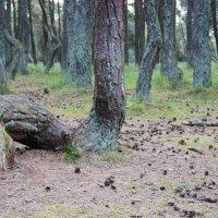 Танцующий лес :: Алеся Юрьевна