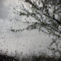 дождь :: Екатерина zZz