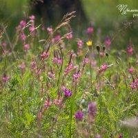 цветы :: Надежда Преминина