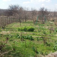 Весна в деревенской усадьбе :: Владимир