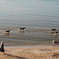 Раннее утро на море :: Ольга  Пусова