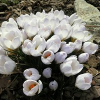 Весеннее цветение. :: Валентина Жукова