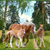 «Ах вы, кони, мои кони златогривые» :: vitalsi Зайцев