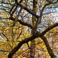 Геометрия леса :: Oxana Morozova