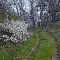 Весна... :: владимир