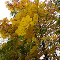 осень.... :: александр дмитриев