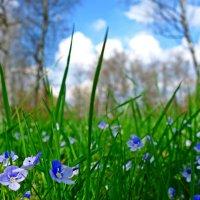 Нежность апреля... :: Galina Dzubina