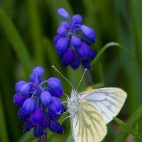 Весенние кракозяблики :: Gleipneir Дария