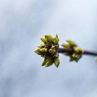 Весны несмелые ростки :: Дмитрий Костоусов