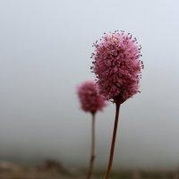 Горные цветы :: Елена Волгина