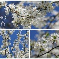 весна пришла :: Yana Odintsova