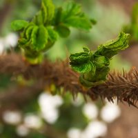 Весна :: лиана алексеева