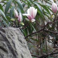 В китайском саду :: Лариса Журавлева