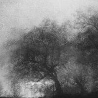 Видеть, как с рассвета до темна сходит за окном её с ума сломанный ветер :: Оксана #