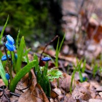 Весна просыпается. :: Наталья