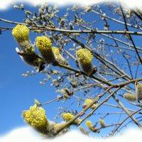 Весна :: veera (veerra)
