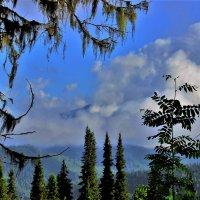 Туман уходит в облака :: Сергей Чиняев