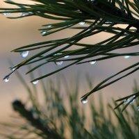 После дождя :: Елена К.