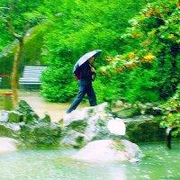 дождь  проливной.  парк.  пешеход. :: Ivana