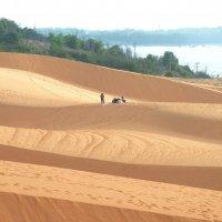 Красные дюны :: Vit