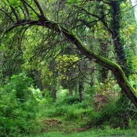 Абхазский лес :: Анастасия Циулина