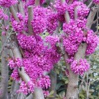 Китайское чудо-дерево :: Лариса Журавлева