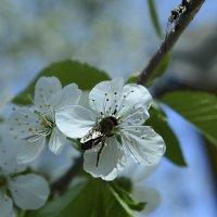 Пчелка :: Владимир Николаевич