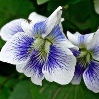 Цветок ...МаленькиЙ = 10 мм ...-- ??????? :: Серёжа Стрельников