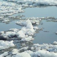 Последние льдинки уходящей Зимы, 2016 :: Марина Щуцких