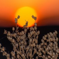 в объятиях весеннего солнца :: Алексей -
