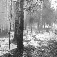 Туман. :: Валерий Молоток