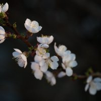 Весна )))) :: Ольга Баганина