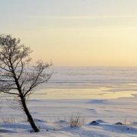 Ветер с моря :: Николай Танаев