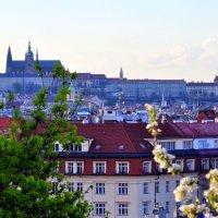Прага весенняя :: vg154