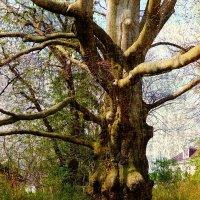 Просто  дерево :: Nina Yudicheva