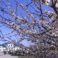 весна пришла... :: татьяна