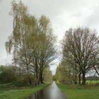 После дождя :: Eduard Mezker