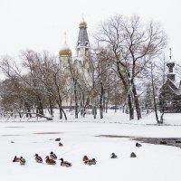 Зима :: Сергей Залаутдинов