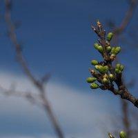 весна :: Сергей Агурбаш