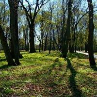 В парке зеленеет... :: °•●Елена●•° Аникина♀