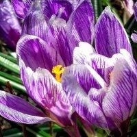 Весна,цветы) :: Юлия Егорова