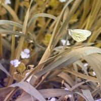 Бабочка :: Анна Брацукова