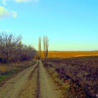 Сельские дороги :: Виктор Шандыбин