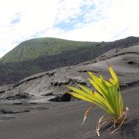 Последствия вулкана.Папуа Новая Гвинея :: Антонина