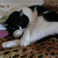 как же сладко спать на хозяйской кровати... :: maxim